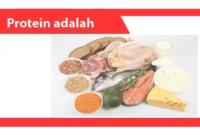 Protein-adalah-Pengertian-Fungsi-Jenis-Klasifikasi-Contoh
